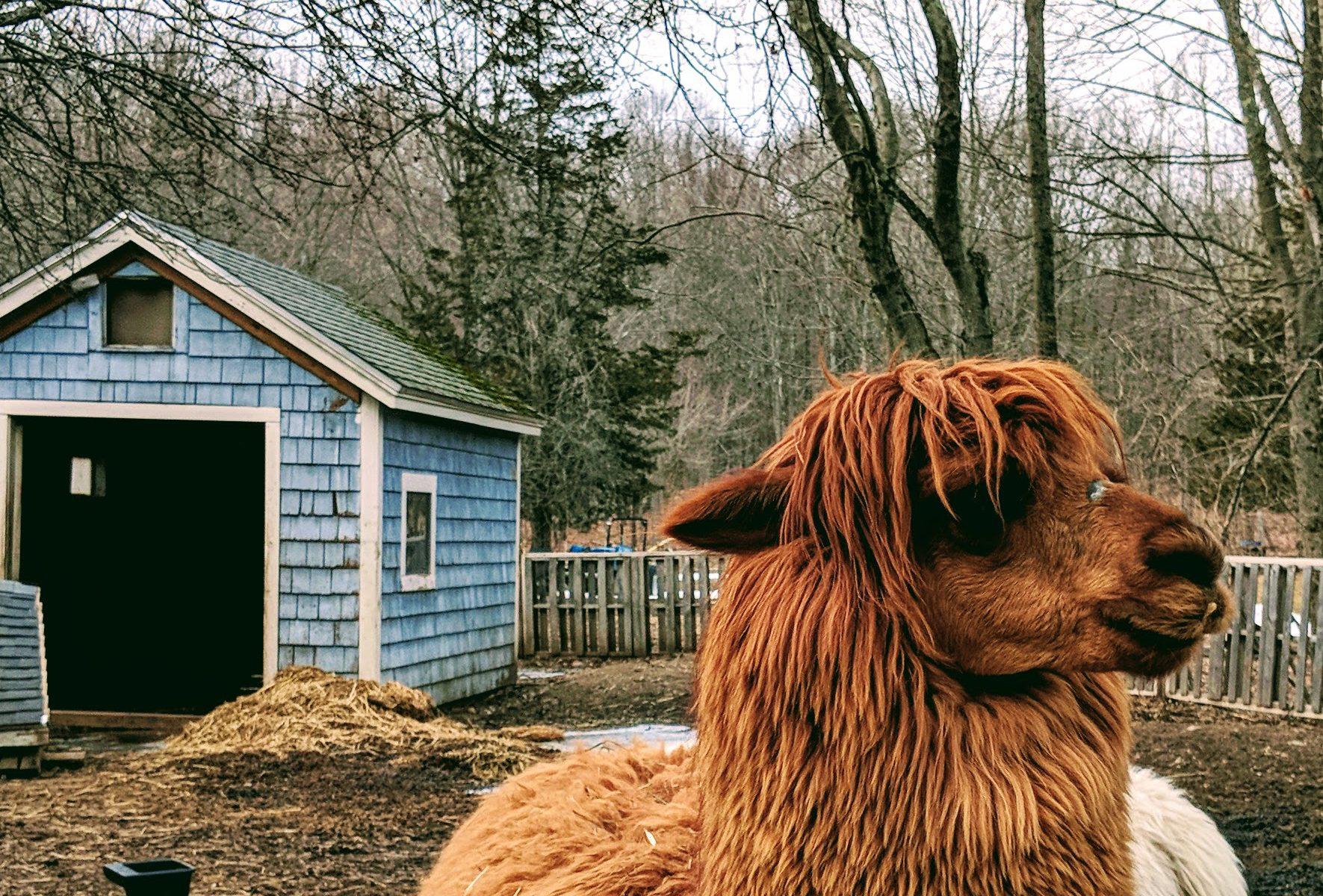 Zeva barnyard winter